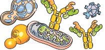 category-cell-biology-04.png