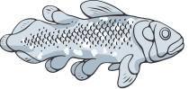 category-fish-08.png
