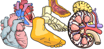 category-human-anatomy-04.png