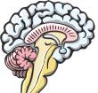 mini-brain01-02.png