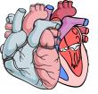 mini-heart.png