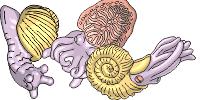 category-molluscs-01.png